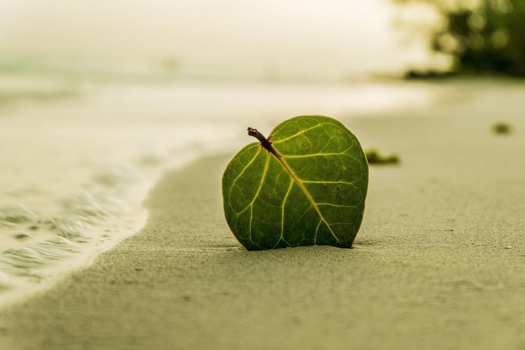 beach-394503