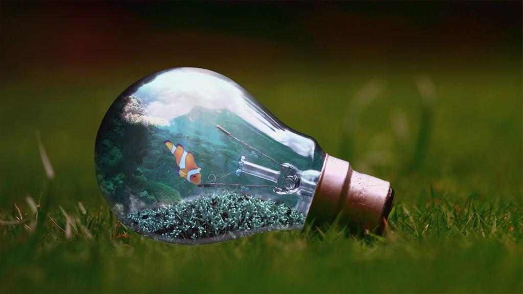 light-bulb-1129247